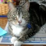 Sadie Guarding the Keyboard